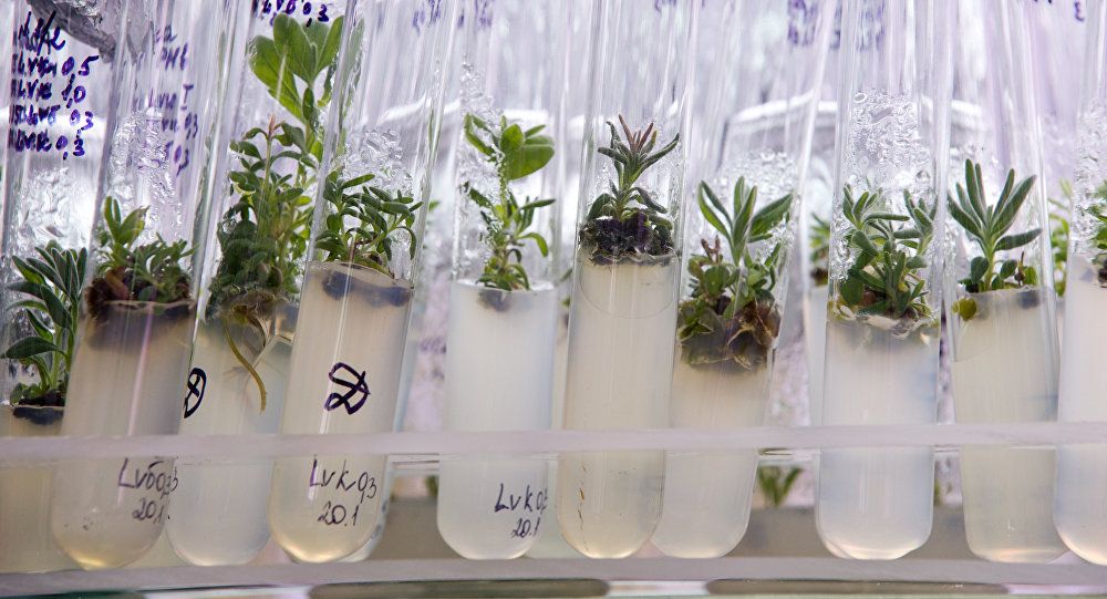 Plant samples at the laboratory